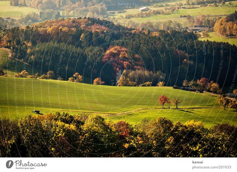Herbsttage Umwelt Natur Landschaft Pflanze Sonnenlicht Schönes Wetter Baum Gras Sträucher Grünpflanze Wildpflanze Wiese Feld Wald Hügel schön grün herbstlich