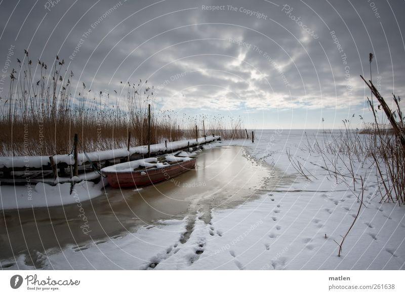 Am Haff Himmel weiß Wolken Winter Landschaft Küste Horizont braun Wetter rosa Ostsee Schilfrohr Fischerboot Wasserfahrzeug Meer Dessert