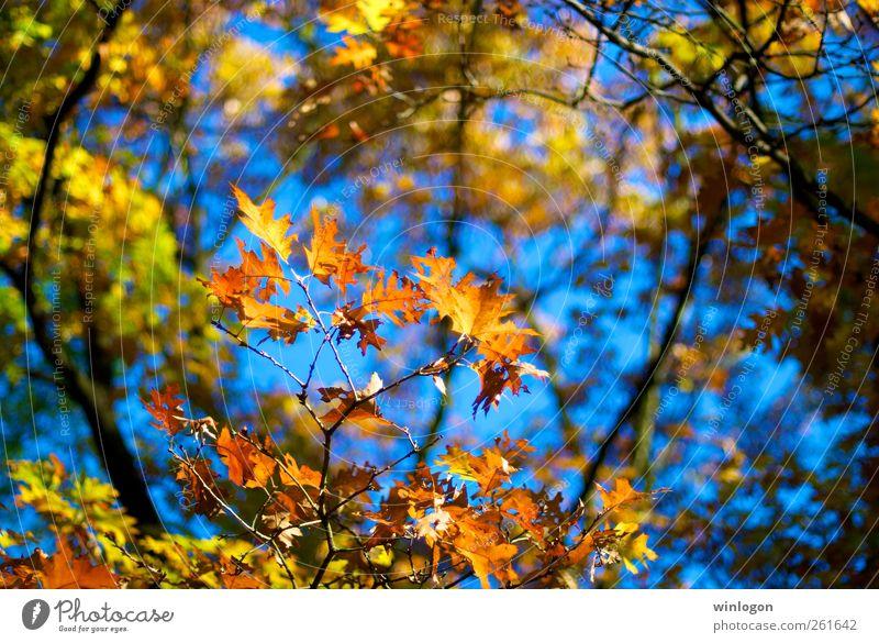 herbstlaub Himmel Natur blau grün schön Baum Pflanze Blatt Wald gelb Erholung Herbst Wärme Stimmung Park Deutschland