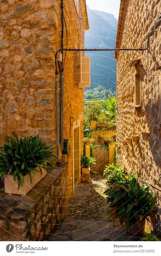Bepflanzte Gassen von Sóller, Mallorca Pflanze Blume Grünpflanze Topfpflanze Dorf Fischerdorf Kleinstadt Stadtrand Altstadt Menschenleer Haus Mauer Wand Treppe