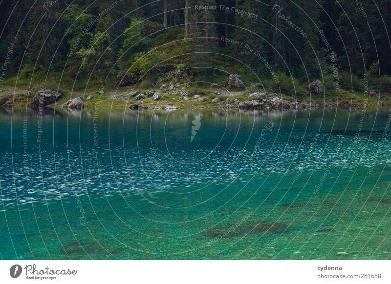 Waldruhe Natur blau Wasser schön Baum Ferien & Urlaub & Reisen Sommer Einsamkeit ruhig Wald Erholung Umwelt Landschaft Freiheit See träumen