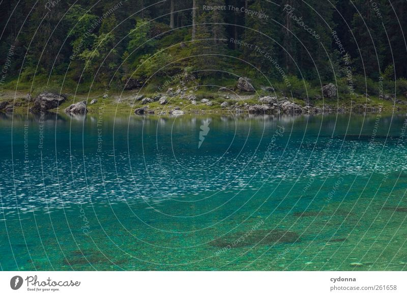 Waldruhe Natur blau Wasser schön Baum Ferien & Urlaub & Reisen Sommer Einsamkeit ruhig Erholung Umwelt Landschaft Freiheit See träumen