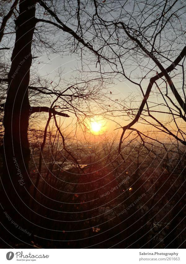 Sonnenaufgang oder Sonnenuntergang? Himmel Natur Baum Winter Einsamkeit ruhig Wald Landschaft Feld wandern einzigartig Schönes Wetter harmonisch Warmes Licht