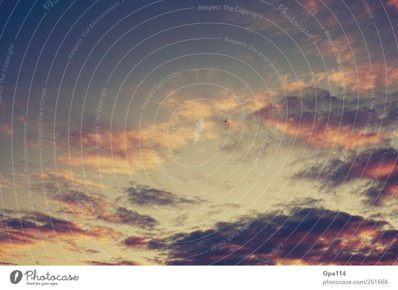 We own the sky Umwelt Natur Luft Himmel nur Himmel Wolken Sonne Sonnenlicht Sommer Herbst Klima Wetter Schönes Wetter Verkehrsmittel Luftverkehr Flugzeug