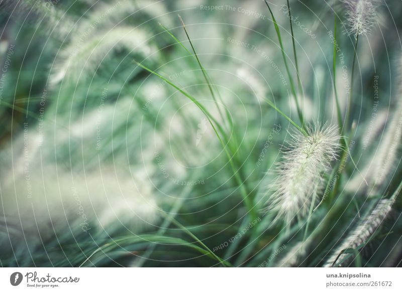puschelzeugs in grün Natur Pflanze Umwelt Bewegung Gras natürlich frisch Sträucher weich Umweltschutz Grünpflanze