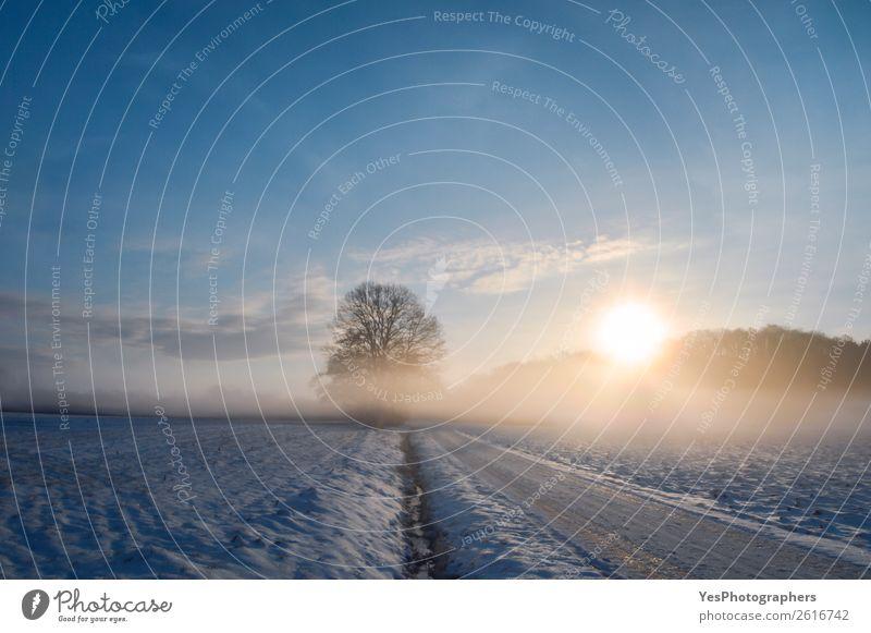 Ferien & Urlaub & Reisen Natur Landschaft ruhig Winter Straße natürlich Schnee Wiese Tourismus Deutschland hell Horizont Nebel Wetter Europa