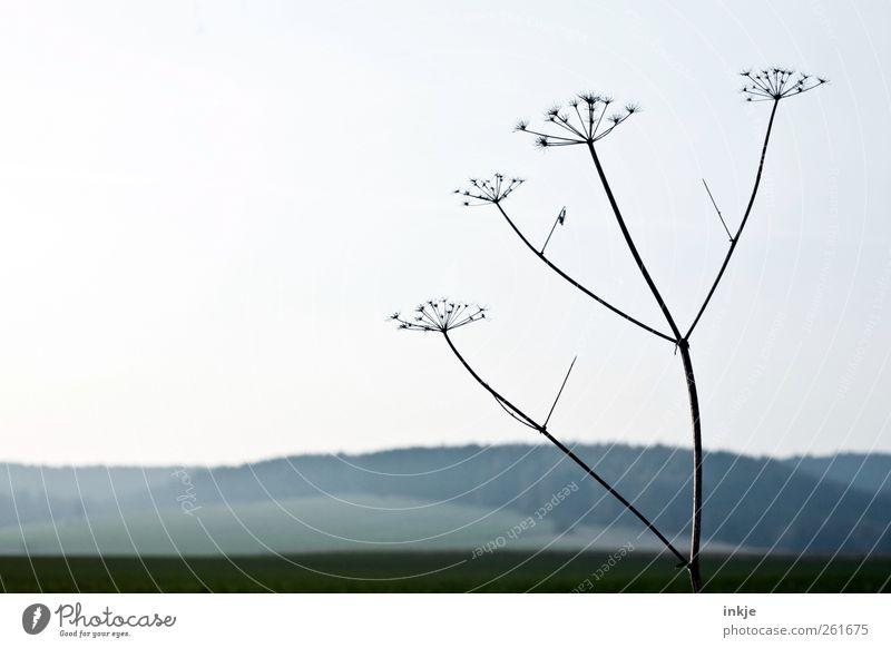Gullivers Reisen IV Umwelt Natur Landschaft Pflanze Himmel Horizont Herbst Winter Klima Schönes Wetter Dürre Blume Gras Wildpflanze Gewöhnliche Schafgarbe Wiese