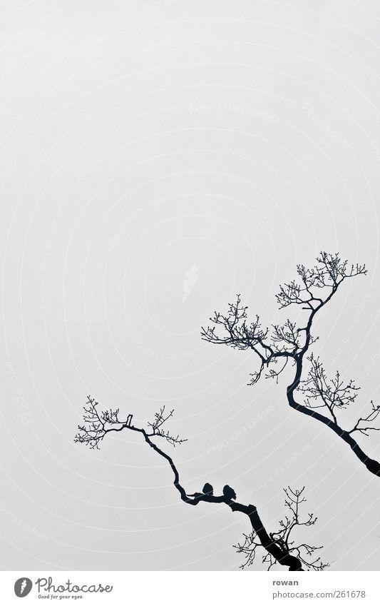 zu zweit Natur Baum Tier Winter ruhig Liebe dunkel Traurigkeit Freundschaft Vogel Zusammensein Tierpaar sitzen Nebel paarweise trist