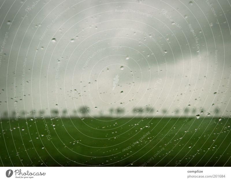 this isn´t happiness Herbst Winter grau grün Wassertropfen Regen Allee Baum Autofenster Scheibe Feld Wiese Natur Traurigkeit dunkle Wolken gräulich Einsamkeit