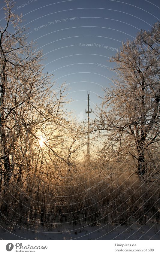 Empfang gesichert! Natur Landschaft Sonne Sonnenaufgang Sonnenuntergang Sonnenlicht Winter Schönes Wetter Eis Frost Schnee Pflanze Baum Sträucher Holz