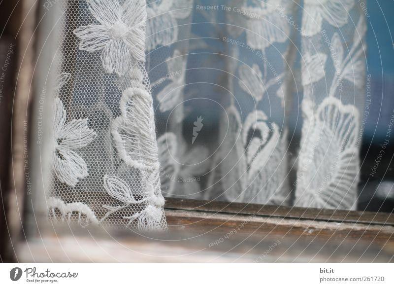 und vorne hängt der Geranienkasten schön Blume Haus Fenster Holz Linie Innenarchitektur Tür Wohnung Häusliches Leben Dekoration & Verzierung trist Stoff
