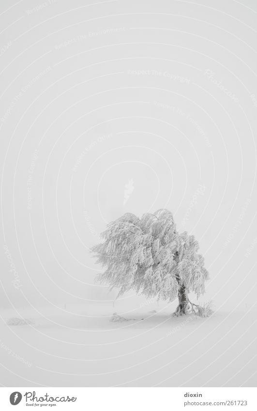 Baumloben | Last Tree Standing Winter Schnee Winterurlaub Umwelt Natur Landschaft Pflanze Klima Wetter schlechtes Wetter Unwetter Sturm Eis Frost Schneefall