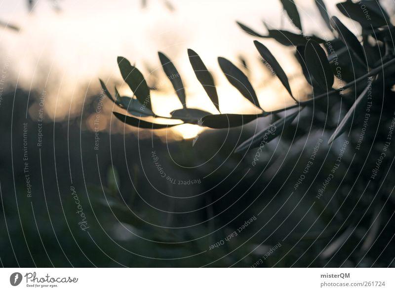 moony olive tree. Natur Pflanze grün Landschaft ruhig Umwelt Zufriedenheit Idylle ästhetisch Romantik Hoffnung Zweig Ernte harmonisch himmlisch Paradies