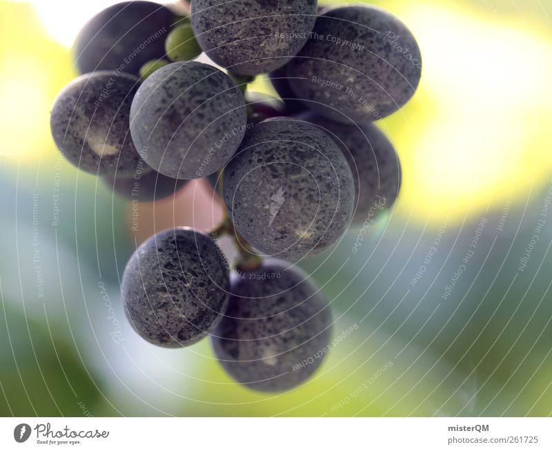 Träubchen. Lebensmittel ästhetisch Zufriedenheit Wein Weinberg Weintrauben Weinlese Weinbau Rotwein Ernte reif Erntehelfer blau Natur lecker Sonne Farbfoto