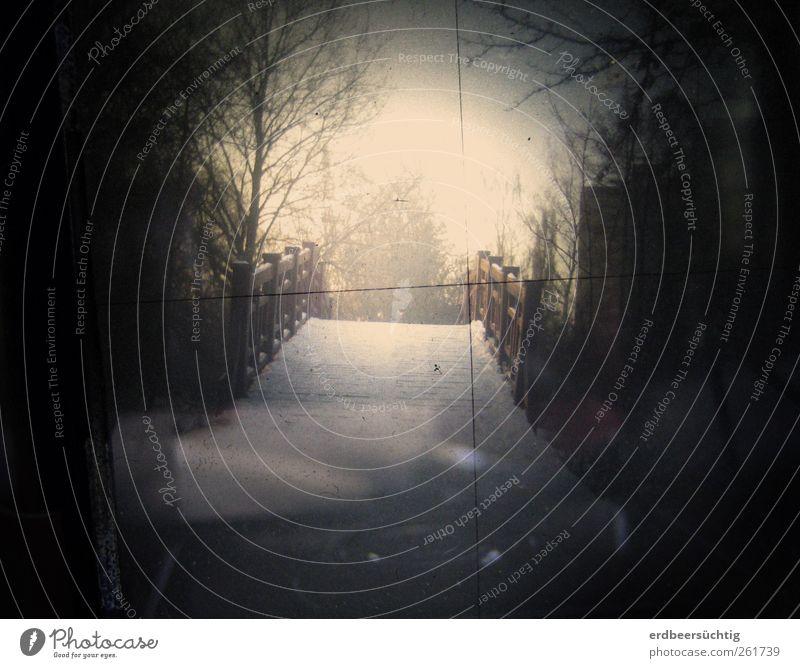 Le pont Umwelt Himmel Eis Frost Schnee Baum Sträucher Garten Park Fußgänger Brücke Holz frieren laufen retro schwarz Stimmung ruhig bizarr geheimnisvoll