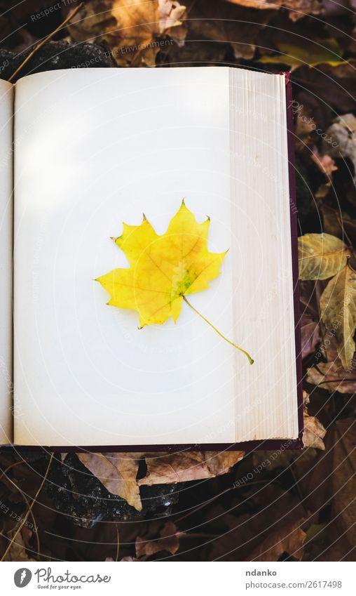 gelbes Ahornblatt Lifestyle Buch Natur Herbst Baum Blatt Park Wald Papier alt lernen lesen retro braun gold Idee Idylle Hintergrund altehrwürdig Literatur