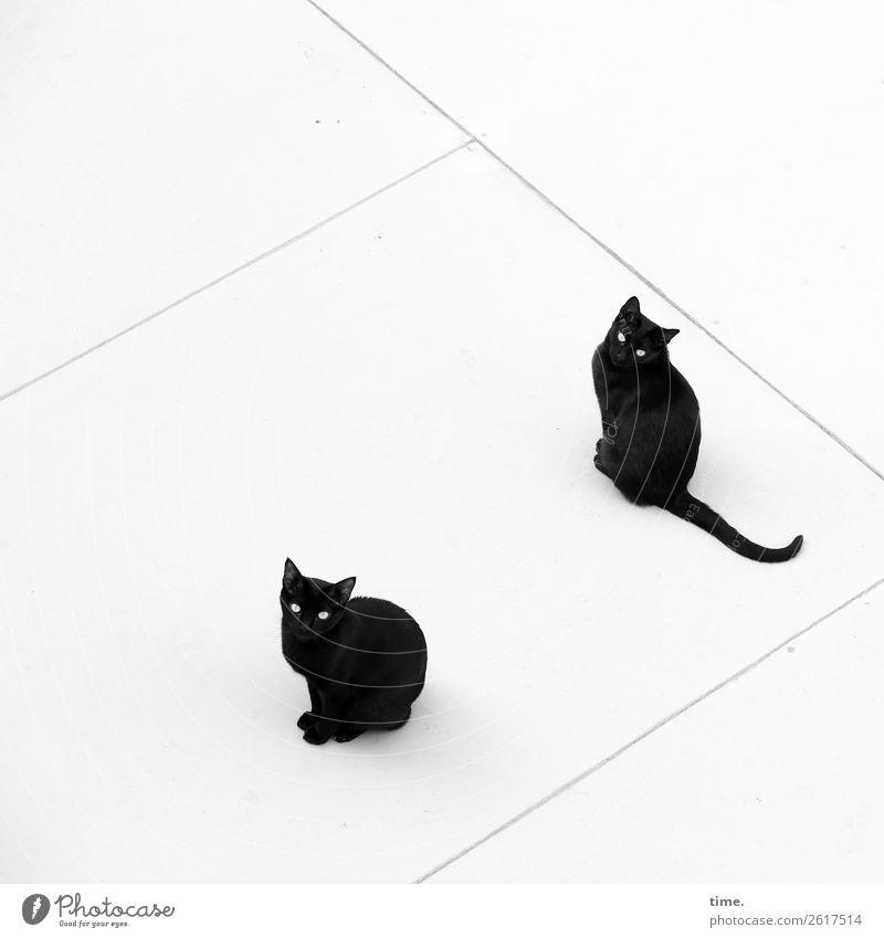 Frühschicht Dach Tier Haustier Katze 2 Linie beobachten Blick sitzen warten natürlich Neugier Stadt schwarz Coolness Willensstärke Verschwiegenheit Zusammensein
