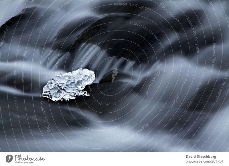 Eisfrosch Natur Wasser Bach Fluss Wasserfall schwarz weiß Frosch Frost gefroren Strömung Stein Skulptur Eisskulptur kalt einzigartig Farbfoto Außenaufnahme