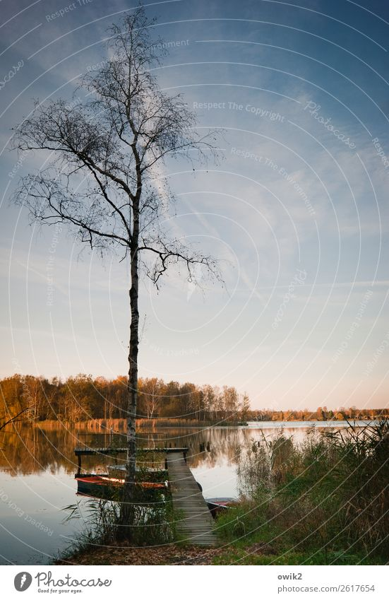 Stiller Herbst Himmel Natur alt Pflanze Wasser Landschaft Baum ruhig Ferne Holz Umwelt Gras Horizont Idylle Schönes Wetter