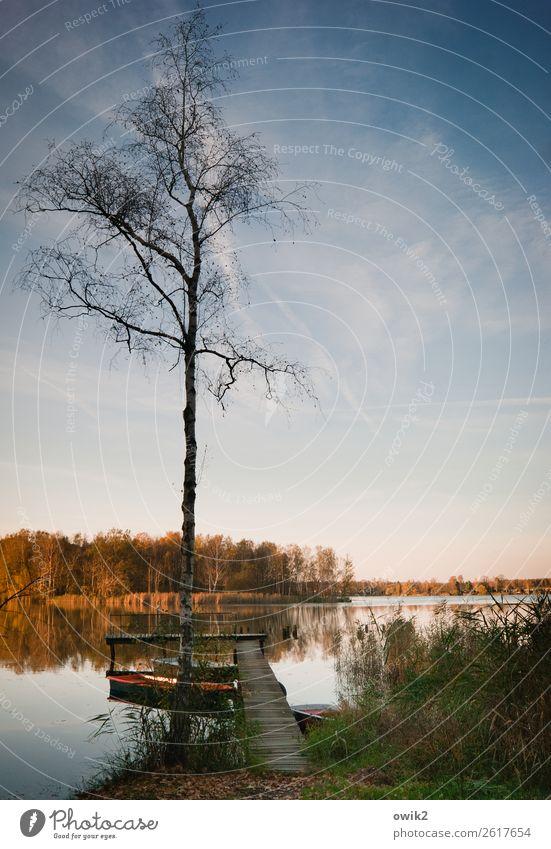 Stiller Herbst Umwelt Natur Landschaft Pflanze Urelemente Wasser Himmel Horizont Schönes Wetter Baum Gras Sträucher Ruderboot Steg Anlegestelle Holz stehen alt