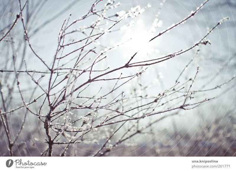 wintasun Natur Pflanze Winter Umwelt kalt Schnee Eis glänzend natürlich frisch Frost Sträucher Ast Schönes Wetter