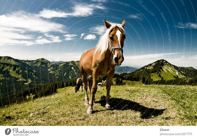 da steht ein ...... Ausflug Berge u. Gebirge wandern Umwelt Natur Himmel Wolken Sommer Alpen Gipfel Pferd 1 Tier Blick stehen ästhetisch blau grün Einsamkeit
