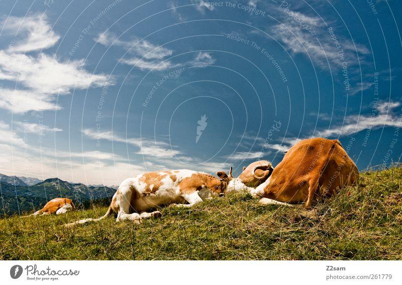 abflacken Himmel Natur Ferien & Urlaub & Reisen Sommer Wolken Tier ruhig Erholung Umwelt Wiese Landschaft Berge u. Gebirge Zusammensein Zufriedenheit wandern liegen