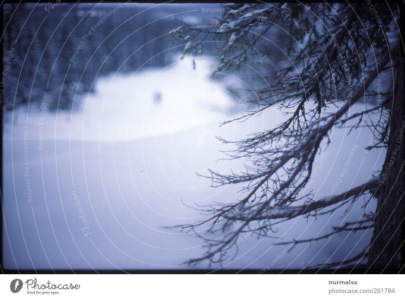 finsterwaldpisten Mensch Natur Pflanze Winter Tier Wald Landschaft dunkel kalt Schnee Kunst Stimmung Eis Klima Lifestyle Frost