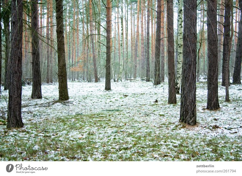 Wald Umwelt Natur Landschaft Pflanze Winter Klima Klimawandel Wetter Eis Frost Schnee Gefühle wallroth Kiefer Nadelwald Baumstamm Nebel Farbfoto Gedeckte Farben