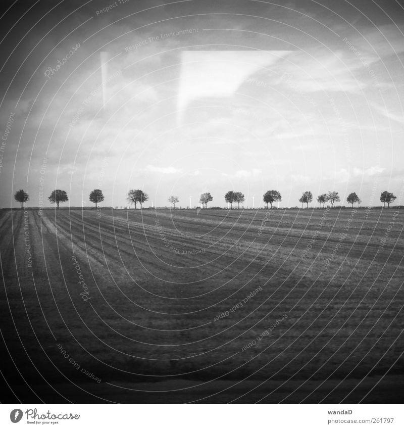 ________________ Himmel schön Baum Wolken Denken Horizont Erde Feld