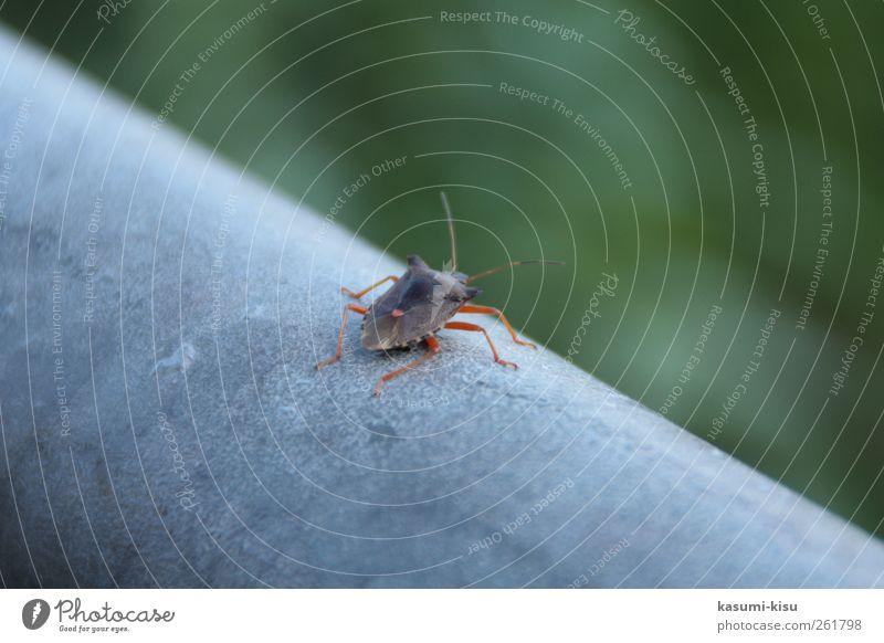 Auf der Mauer, auf der Lauer... Käfer krabbeln grau grün Leben Umwelt Farbfoto Nahaufnahme Tag
