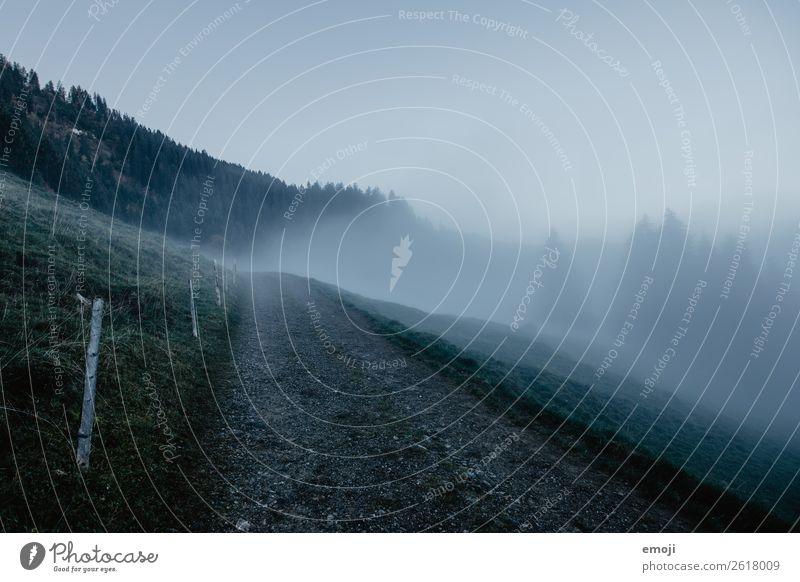 Nebel auf dem Wirzweli Umwelt Natur Landschaft Herbst Klima Wetter schlechtes Wetter Wiese dunkel kalt blau Wege & Pfade Farbfoto Gedeckte Farben Außenaufnahme
