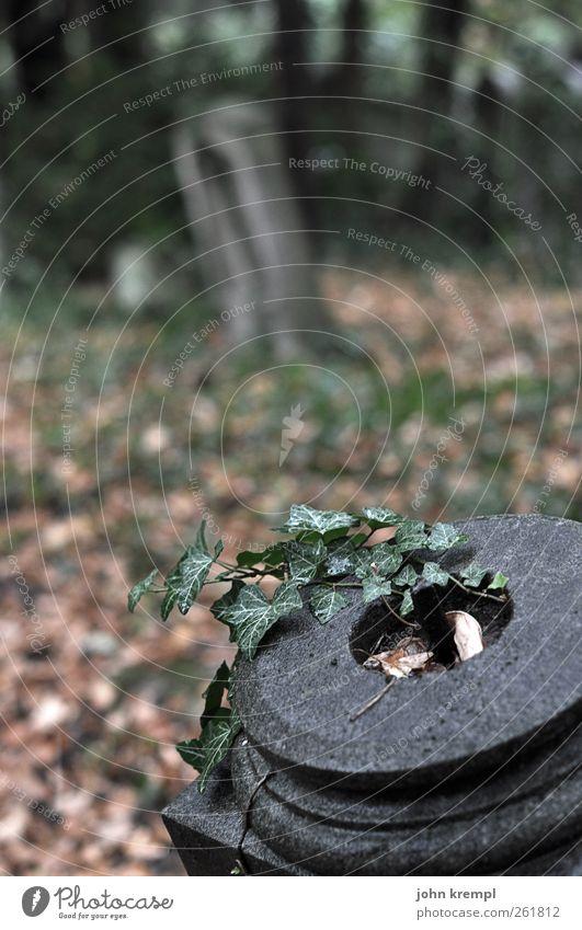 ruhe grün Einsamkeit dunkel Religion & Glaube Tod grau Stein braun trist Vergänglichkeit Romantik Wandel & Veränderung Hoffnung historisch Trauer Regenwasser