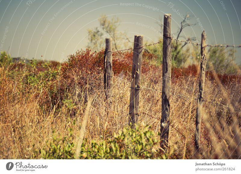 Der Zaun Natur grün Ferien & Urlaub & Reisen Pflanze Sonne Sommer Ferne gelb Umwelt Landschaft Wärme braun Ausflug Abenteuer Sträucher Schönes Wetter
