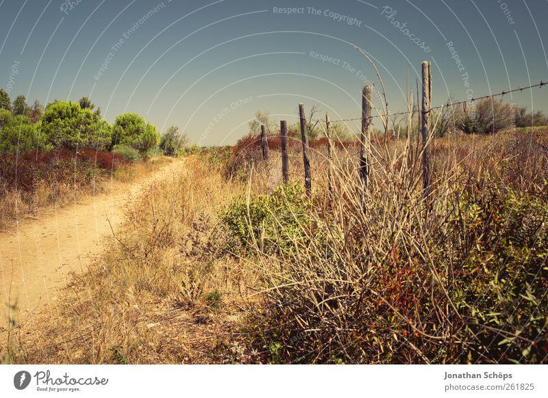 Der Weg zum Zaun Ferien & Urlaub & Reisen Ausflug Abenteuer Ferne Freiheit Sommer Sommerurlaub Sonne Umwelt Natur Landschaft Schönes Wetter Pflanze Sträucher