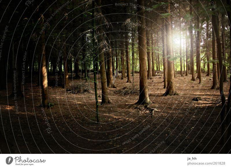 Wald Natur Baum dunkel Umwelt Wege & Pfade Holz Energiewirtschaft Zukunft Spaziergang Trauer Verfall Wissenschaften Umweltschutz Sonnenenergie Klimawandel