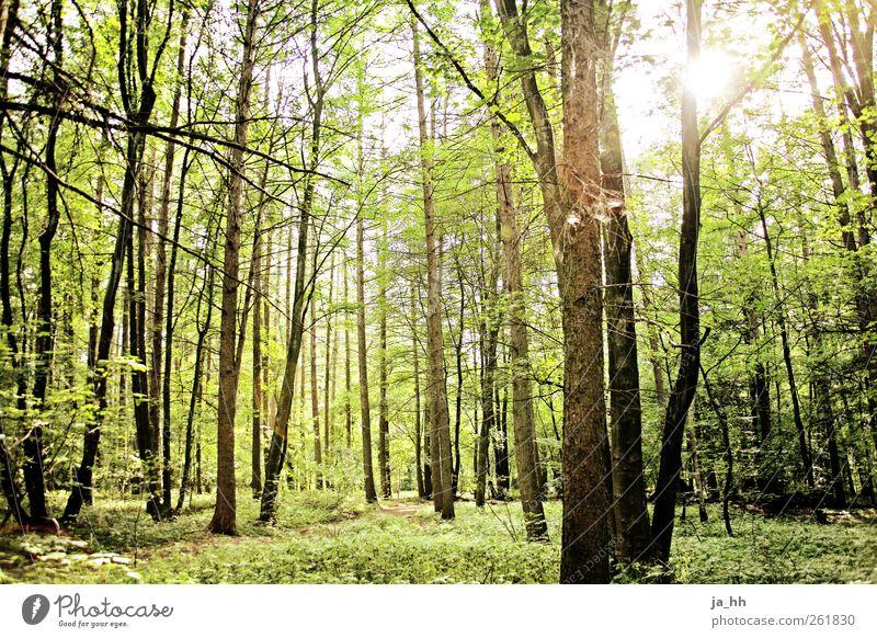 Wald 2 Wissenschaften Fortschritt Zukunft Energiewirtschaft Erneuerbare Energie Sonnenenergie Umwelt Natur Sonnenlicht Frühling Sommer Baum Sträucher Moos