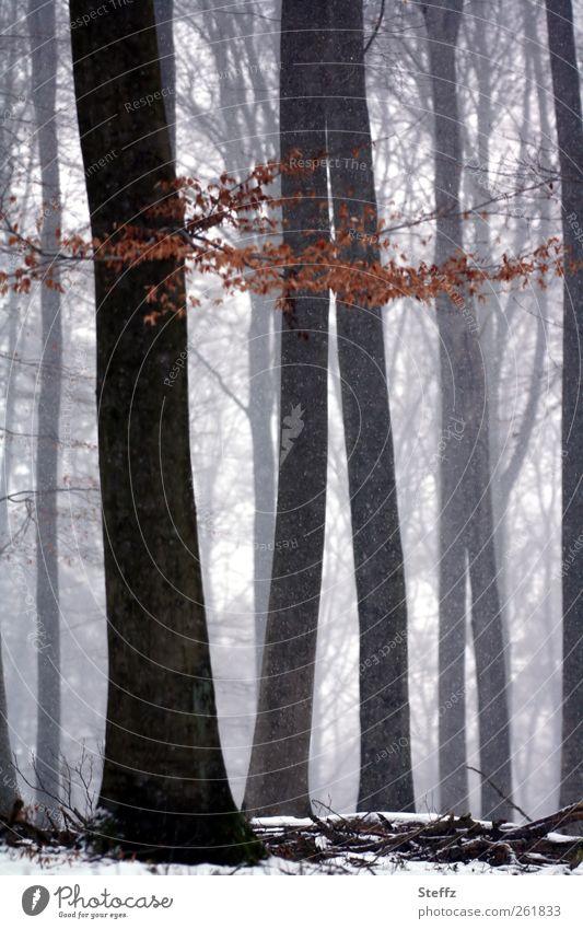 Stille im Wald Winter Winterstille heimisch nordisch unheimlich verwunschen verwunschener Wald Ruhe Nebel Schneefall stimmungsvoll Schneelandschaft Nebelwald