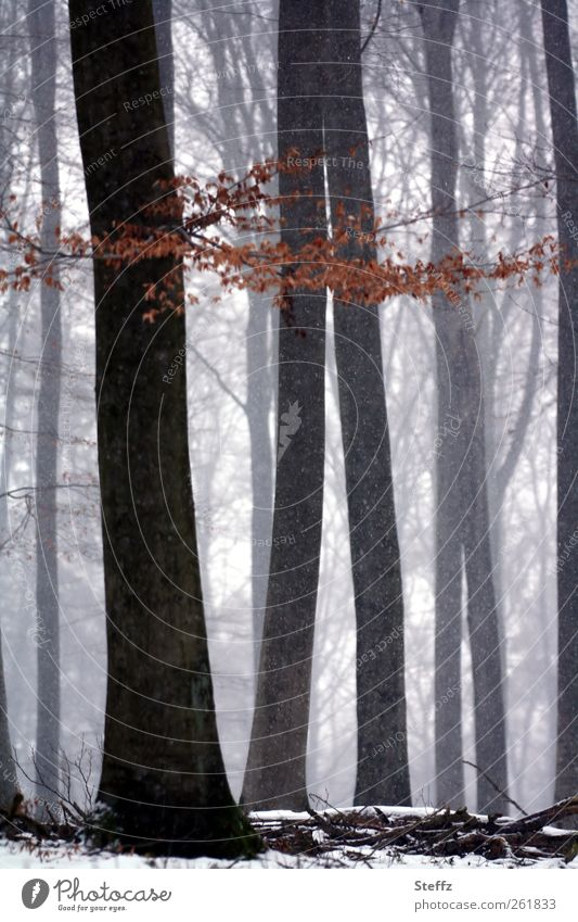 Waldstille Natur schön Baum Einsamkeit Landschaft ruhig Winter Wald kalt Schnee Stimmung Schneefall Nebel Zweig Schneelandschaft rieseln