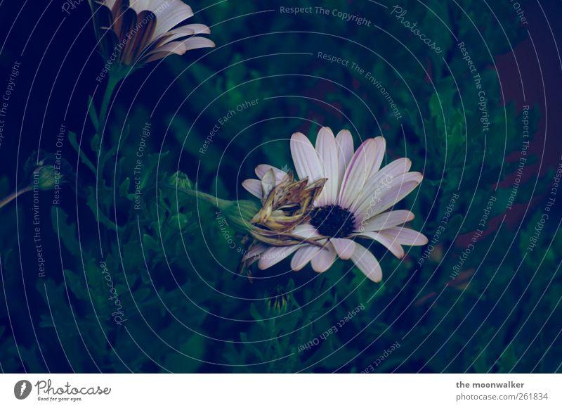 wo bleibt der sommer ? Natur grün Sommer Pflanze Blume Umwelt Landschaft dunkel Wiese Herbst grau Blüte Garten Park braun rosa