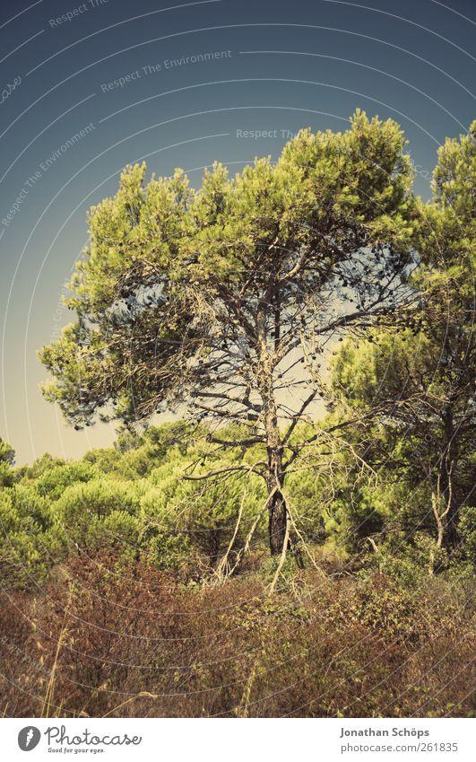 Der Baum neben dem Weg Ferien & Urlaub & Reisen Ausflug Abenteuer Ferne Freiheit Sommer Sommerurlaub Umwelt Natur Landschaft Pflanze Schönes Wetter ästhetisch
