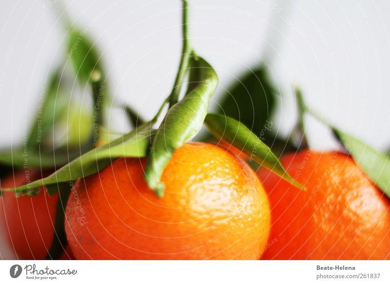 Per Express aus der Orangenplantage Natur Pflanze grün Gesundheit Lebensmittel orange Frucht frisch ästhetisch Ernährung genießen Duft exotisch Erfrischung