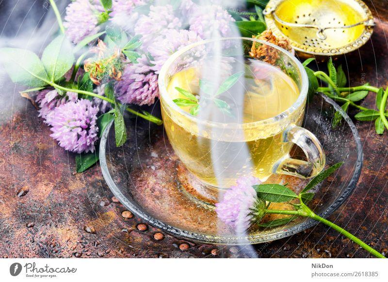 Heißer Kräutertee mit Klee Tee Kraut heiß kochendes Wasser Rauch Verdunstung Kräuterbuch trinken Gesundheit Tasse Blatt Blume Getränk grün natürlich Medizin