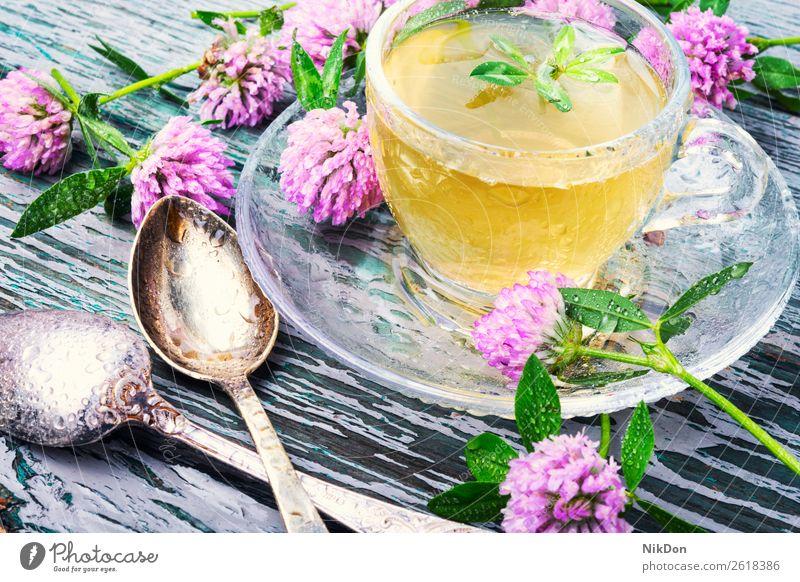 Gesunder Tee mit Klee Kraut Kräuterbuch trinken Gesundheit Tasse Blatt Blume Getränk grün natürlich Medizin Pflanze Blütenblatt Natur aromatisch Teetasse Becher