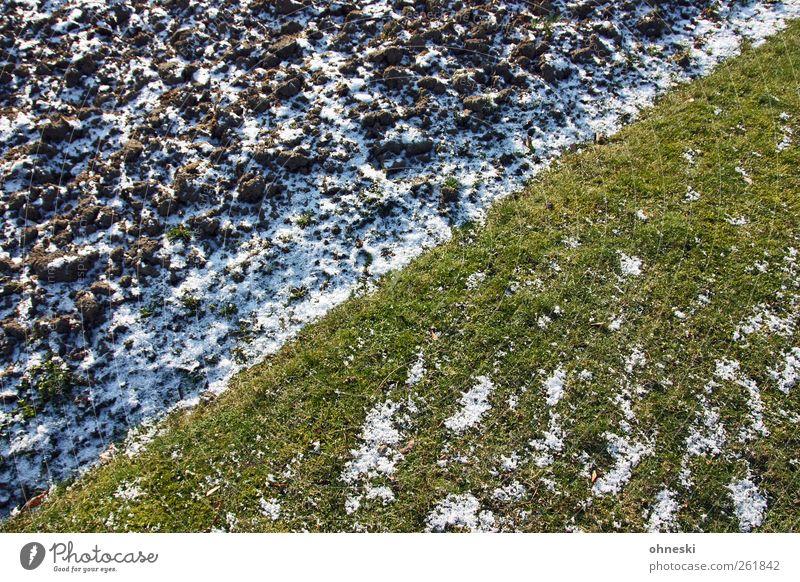 Flagge zeigen Winter Wiese Leben kalt Schnee Gras Linie Erde Eis Feld Frost