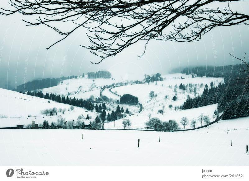 ~ Landschaft Himmel Wolken Winter Wetter schlechtes Wetter Nebel Schnee Baum Hügel Dorf Straße kalt blau schwarz weiß Idylle Wege & Pfade Ast Farbfoto