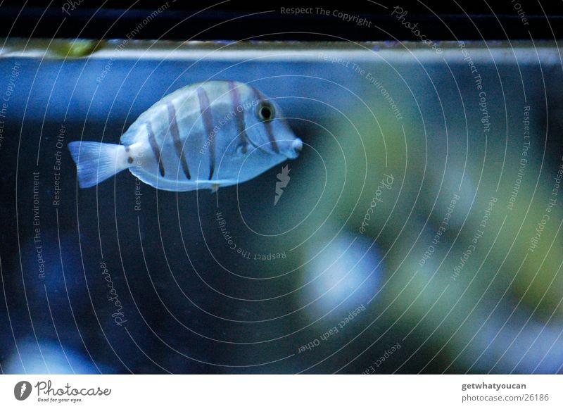 Meer im Glaskasten Tier Aquarium gefangen tauchen Unschärfe Einsamkeit Oberfläche Am Rand kalt Licht Fisch Wasser Fensterscheibe Unterwasseraufnahme