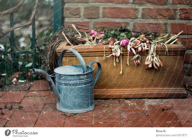 BlumenFriedhof Winter Blume ruhig Wand Gefühle Mauer Traurigkeit Zeit authentisch Häusliches Leben Vergänglichkeit Fliesen u. Kacheln Stillleben hängen Terrasse Friedhof