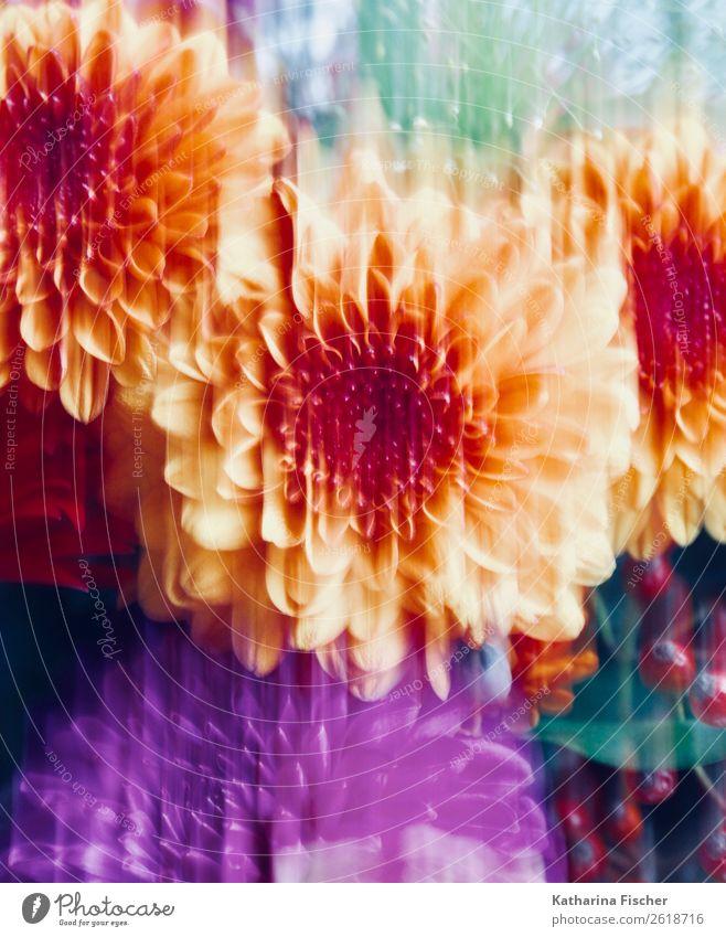 Blumenbild Kunst Gemälde Natur Pflanze Blüte Dahlien Blühend leuchten blau braun mehrfarbig gelb grün violett orange rosa türkis weiß Herbststrauß Blütenpflanze