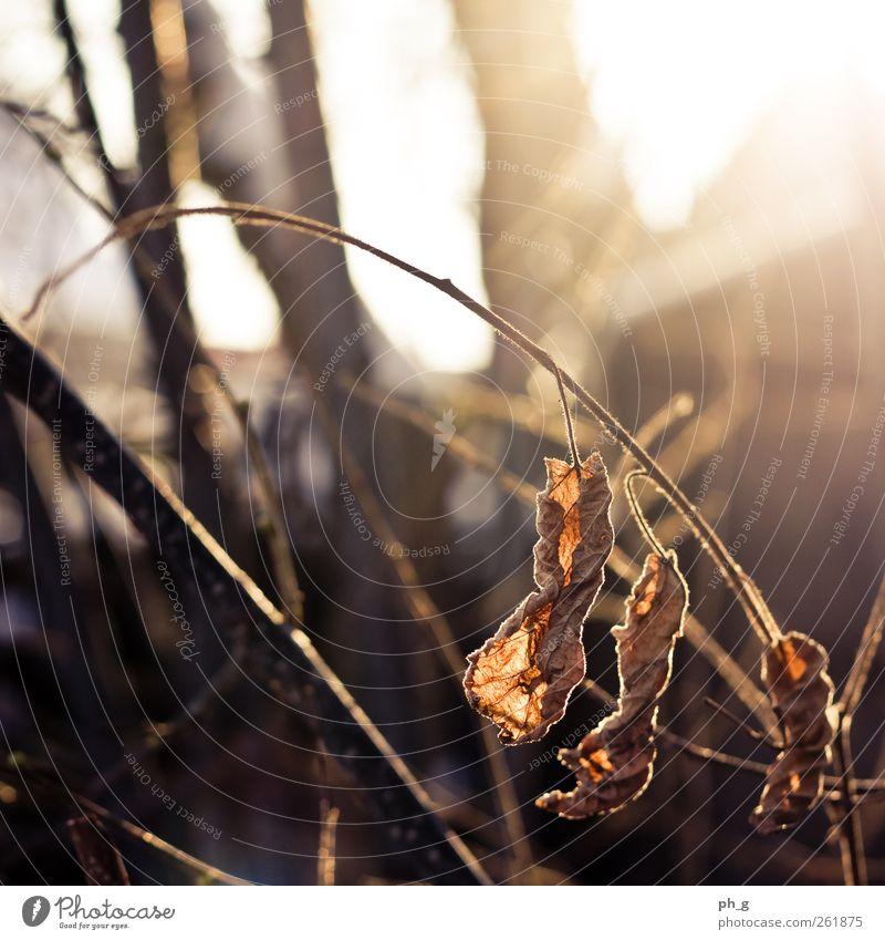 Gegenlicht > alles Himmel Natur Pflanze blau schön weiß Sonne Blatt Winter Wald schwarz kalt Herbst natürlich Glück braun